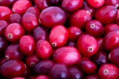 Airelas vermelhas frescas Imagem de Stock