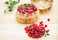 Airelas vermelhas frescas Foto de Stock Royalty Free