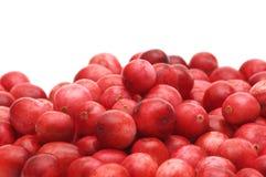 Airelle rouge fraîche Photo libre de droits