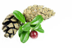 Airelles fraîches avec quelques feuilles et pinecones d'isolement sur le blanc photos stock