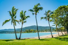 Airlie beach palm trees and coconut trees in Australia stock photos