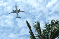 Airliner and coconut palm Stock Image