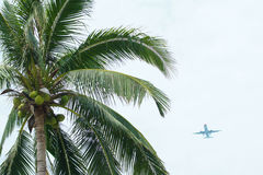 Airliner and coconut palm Royalty Free Stock Photo