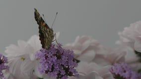 Airobics da borboleta