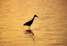 Airone al tramonto fotografie stock libere da diritti