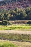 Airone bianco maggiore solo in regione paludosa vicino al lago Kerkini, Grecia fotografie stock libere da diritti