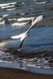Airone bianco in spiaggia Immagini Stock Libere da Diritti