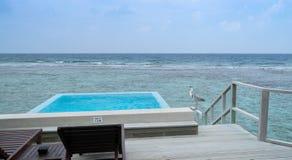 Airone cenerino sul terrazzo del bungalow dell'acqua in Maldive fotografia stock
