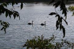 Airone che sta in un lago Fotografie Stock Libere da Diritti
