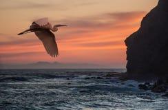 Airone a Dana Point, California fotografia stock libera da diritti