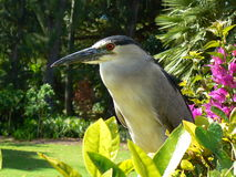 Airone nel GIARDINO ZOOLOGICO di Waikiki fotografie stock