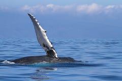 Airone sopra l'oceano Pacifico Immagini Stock Libere da Diritti