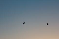 Airplaine e o pássaro Imagem de Stock Royalty Free