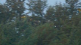 Airplane Airbus 320 landing stock video