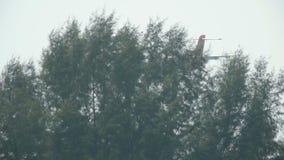 Airplane ATR 72-500 landing stock video