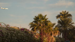 Airplane flying over palm trees stock video