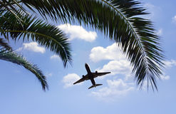 Airplane flying over tropical palm trees Stock Photos