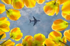 Airplane flying over blooming yellow tulips stock photos