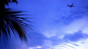 Airplane flys on twilight time at sky and palm stock video