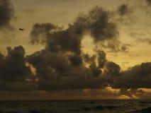 Airplane landing at sunset in Barbados Stock Images