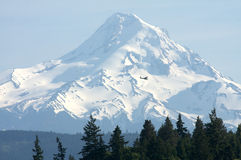 Airplane and Mount Hood Stock Image