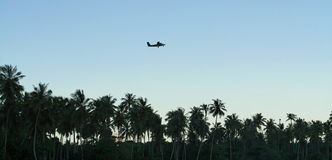 Airplane over palm trees stock photos