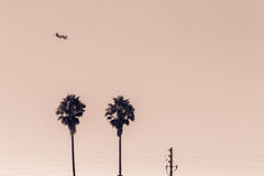 Airplane over palm trees Royalty Free Stock Photography