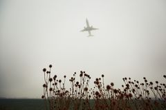 Airplane in thick fog Stock Image