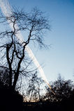 Airplane track in the sky, dramatic scene from the park during s Stock Photos