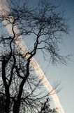 Airplane track in the sky, dramatic scene from the park during s Royalty Free Stock Image