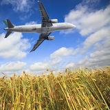 Airplane and wheat field Royalty Free Stock Image