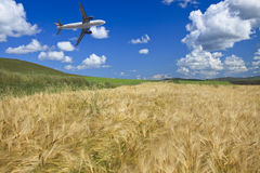 Airplane and wheat field Stock Image