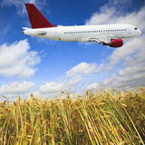 Airplane and wheat field Royalty Free Stock Images