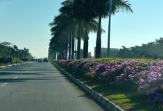Airport approach road with natural flowers - stock photo royalty free stock photography