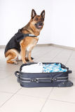 Airport canine Royalty Free Stock Photography