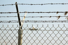 Airport fence. And flying airplane Stock Photography