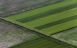 Airshot of fields Stock Photos
