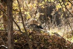 Airsoft prickskyttskytte Royaltyfria Foton