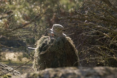 Airsoft Sniper. Sniper with ghillie waiting for target in an Airsoft party Stock Photos