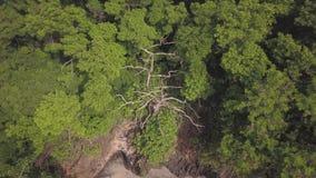Airview de un árbol muerto entre la vegetación gruesa de la selva tropical, vídeo fantástico de la naturaleza tropical, almacen de metraje de vídeo