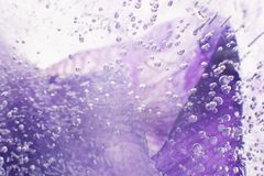 Airy delicate bubbles flowing through ice with purple colors und Stock Images