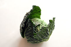 Airy opened savoy cabbage. On white background Royalty Free Stock Images