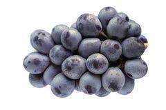 #2 aislado uva púrpura japonesa Imágenes de archivo libres de regalías