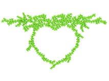 Aislante de la hiedra de la forma del corazón en blanco Foto de archivo