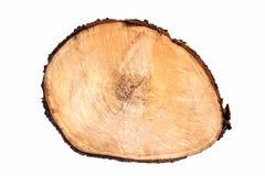 Aislante de madera del círculo del anillo anual de la rebanada de la textura del árbol en el fondo blanco Fotos de archivo libres de regalías