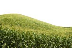 Aislante del campo de maíz Fotos de archivo