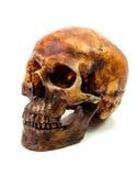 Aislante del cráneo Fotos de archivo libres de regalías