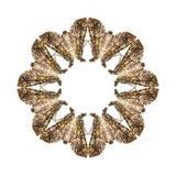 Aislante geométrico de la forma de la mariposa en el fondo blanco Imágenes de archivo libres de regalías