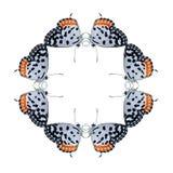 Aislante geométrico de la forma de la mariposa en el fondo blanco Fotos de archivo libres de regalías