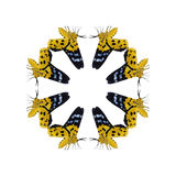 Aislante geométrico de la forma de la mariposa en el fondo blanco Imagen de archivo libre de regalías